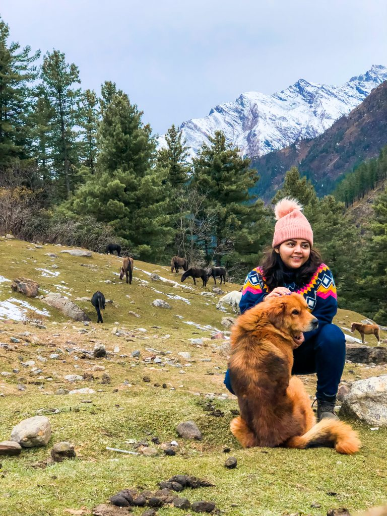 dogs of himachal